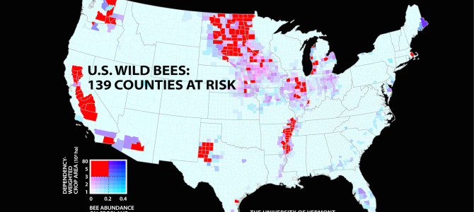 National Analysis of Wild Bee Abundance Highlights Areas of Concern