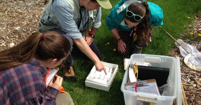 Undergraduate REU Opportunity: Pollination services provided by native bees (Burlington, VT)