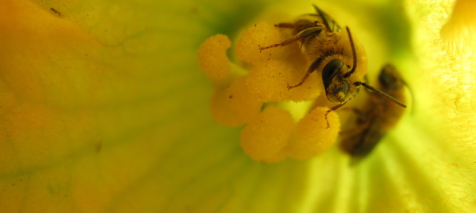 Five New Articles on Pollinators from Penn State Extension