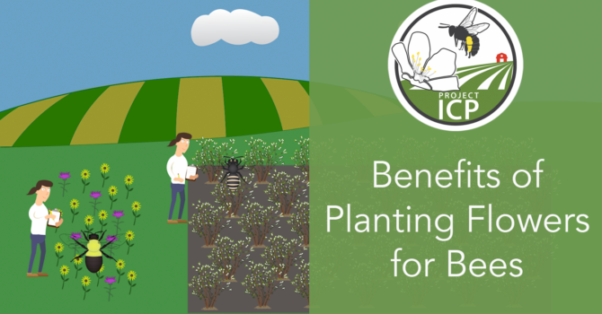 New video: The Benefits of Planting Flowers for Bees