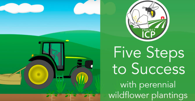 New Video Series: Planting Flowering Habitat for Bees
