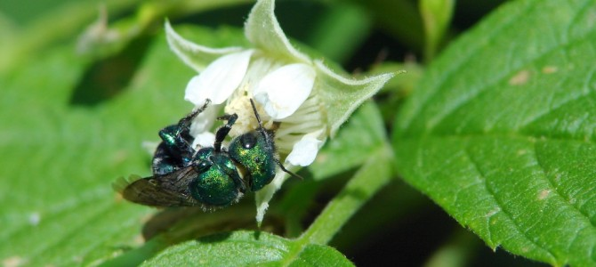 New Steps to Protect Pollinators, Critical Contributors to Our Nation's Economy