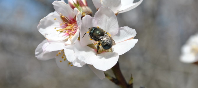 Orchard Bee Association Annual Pollinator Symposium and Expo