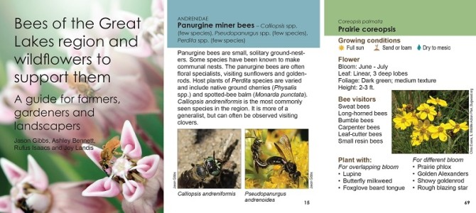New Guide to Bees of the Great Lakes