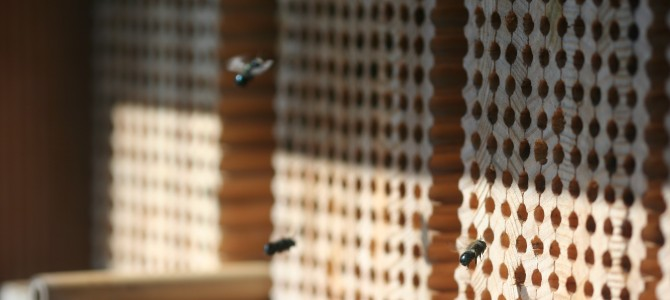 Gardening and Landscape Practices for Nesting Native Bees
