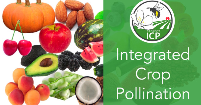 New video introduces the concept of Integrated Crop Pollination
