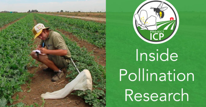 New video: An Inside Look at Pollination Research